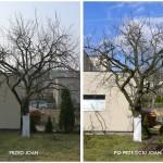 Śliwa - przed i po Joan