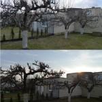 Drzewa wpadły pod moją ręczną kosiarkę ;)