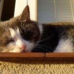 Błogo tak spać w wieczornym słońcu